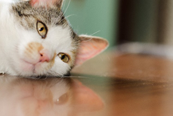寝ころぶ猫の画像
