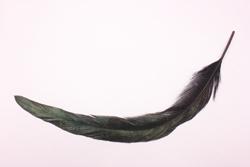 カラスの羽根の画像