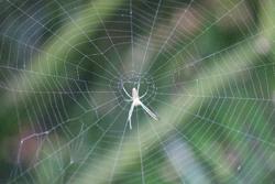 蜘蛛の巣を張る蜘蛛の画像