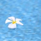 プールに浮かぶ花の画像