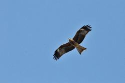 空を飛ぶ鳥の画像