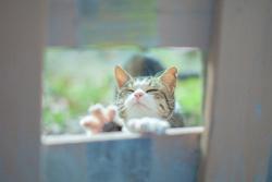 日向ぼっこをする猫の画像