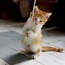 後ろ足で立つ猫の画像