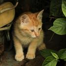 軒下に隠れる子猫の画像