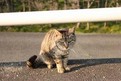 道路にたたずむ猫の画像