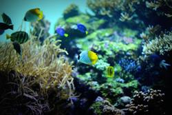 海を泳ぐ熱帯魚の画像
