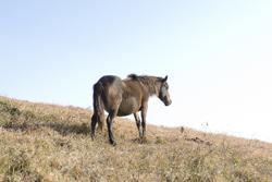 草原の中の馬の画像