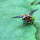 葉の上に止まる虫の画像