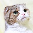 猫の顔の画像