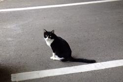 白黒の猫の画像