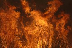 藁を焼く炎の画像