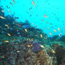 海で泳ぐ熱帯魚の画像