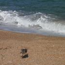 波のある海の画像