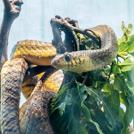 木に巻き付く蛇の画像