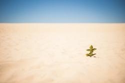 砂漠の夢を見たときの夢占い・夢診断