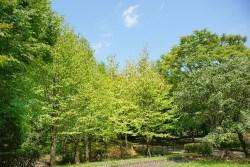 森の夢を見たときの夢占い・夢診断