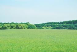 草原の夢を見たときの夢占い・夢診断