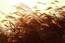 風の夢を見たときの夢占い・夢診断