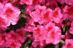 花の夢を見たときの夢占い・夢診断