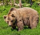 熊の夢を見たときの夢占い・夢診断