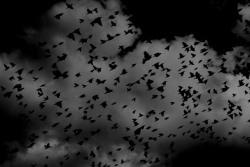黒の夢を見たときの夢占い・夢診断