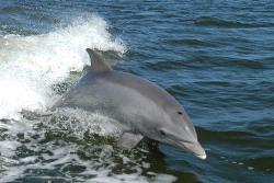 イルカの夢を見たときの夢占い・夢診断
