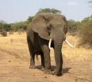 ゾウの夢を見たときの夢占い・夢診断