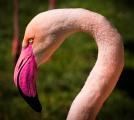 ピンクの夢を見たときの夢占い・夢診断