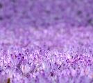 紫の夢を見たときの夢占い・夢診断