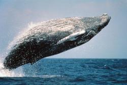 クジラの夢を見たときの夢占い・夢診断