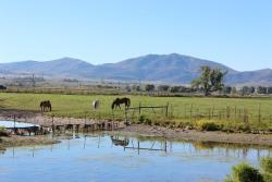 牧場の夢を見たときの夢占い・夢診断