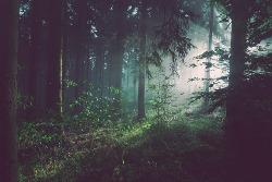 森の中にいる夢